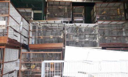 Polícia apreende 240 aves em condições precárias