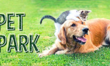 Encontro de pets será realizado no dia 8 em shopping da Capital