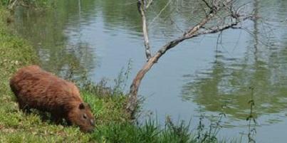 Brasil tem 1.173 espécies em risco