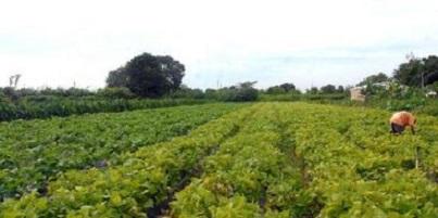 Ministério da Agricultura prepara medida provisória que muda inspeção sanitária